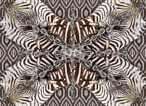 120902-zebra-180x130-rz-ind-5-lr